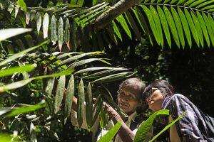 Especialistas analizando la flora